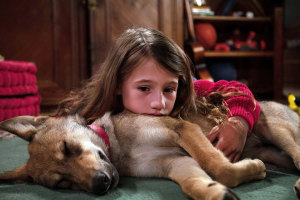 Фильм Мой волк (2022)